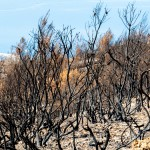 verbrannte Bäume, Kroatien